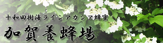 十和田樹海ライン産 アカシア蜂蜜 瓶入り