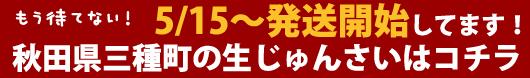 秋田県三種町の生じゅんさい