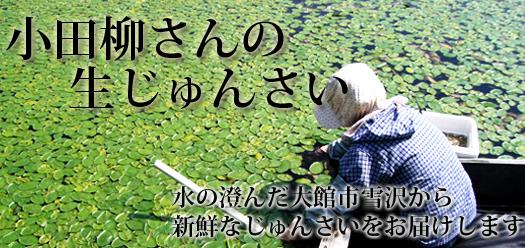 雪沢じゅんさい(ジュンサイ)