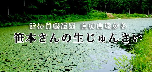 じゅんさい(じゅん菜・ジュンサイ)