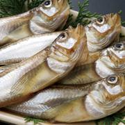 魚介類・魚加工品