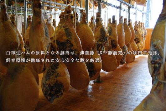 白神生ハムの原料となる豚肉は、無菌豚 (SPF豚認定)の秋田三元豚。 飼育環境が徹底された安心安全な豚を厳選。
